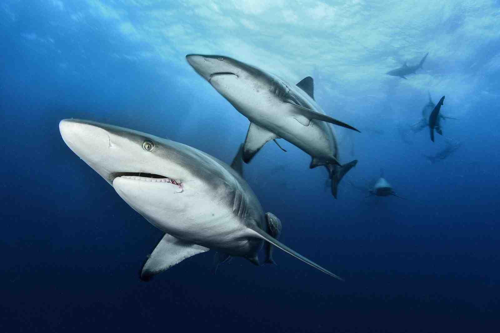 Écosystèmes de récifs coralliens qui abritent des populations denses de requins (plus de 700 requins) Atoll de South Pass Fakarava, Polynésie française.