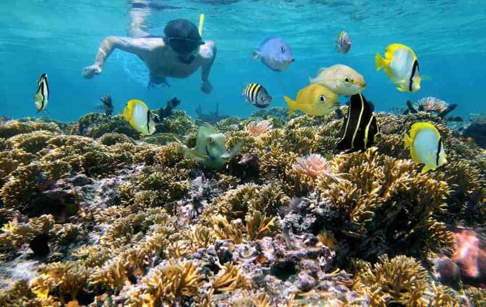 Explorez les merveilles de la plongée sous-marine au Costa Rica