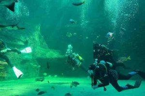 Faites le grand saut à l'école de plongée Two Oceans Aquarium