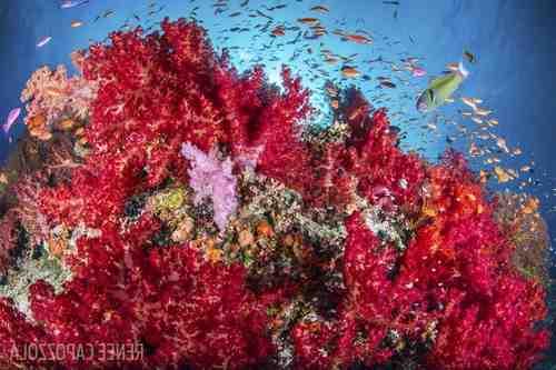 Fidji Réouverture   Scuba Diver Mag