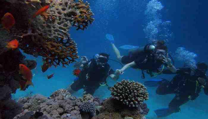 Karwar: Venez sur l'île de Netrani - Profitez de la plongée sous-marine