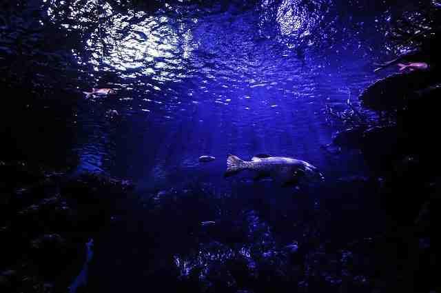 La meilleure plongée sous-marine aux États-Unis