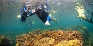 Nettoyage sous-marin Hallets Cove