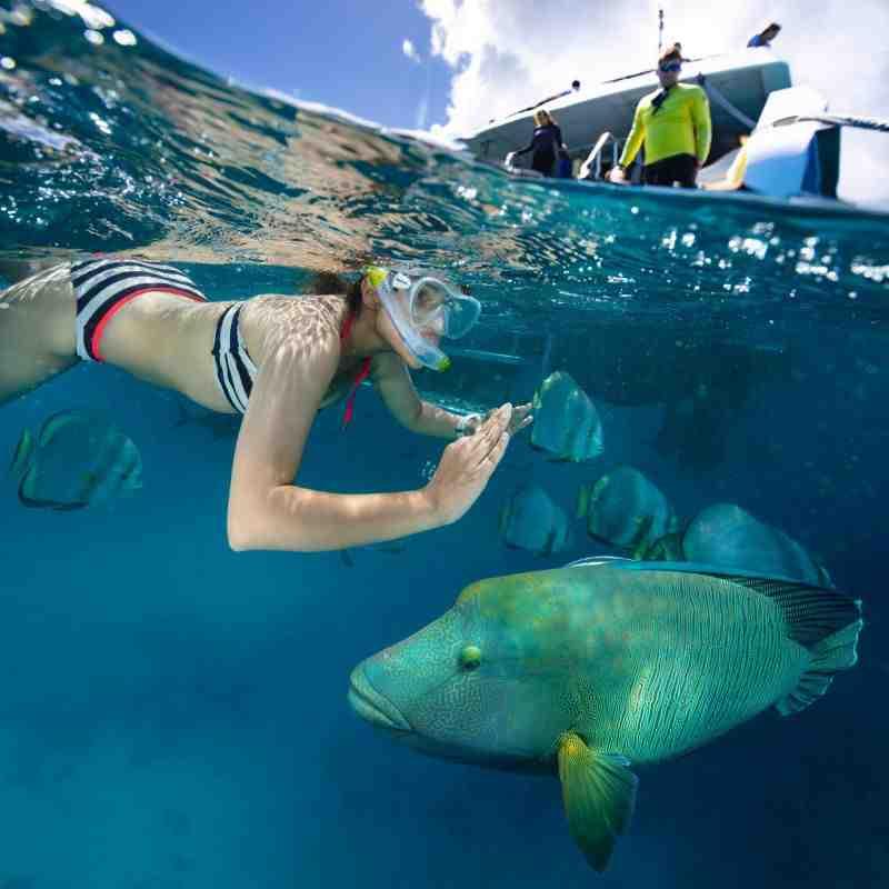Parineeti Chopra partage des photos d'une session de plongée sous-marine aux Maldives ; les qualifie de «Méditation»