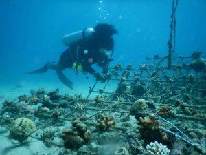 Un plongeur sous-marin appelle à la conservation marine et à la réhabilitation des coraux