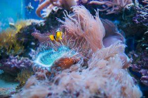 récif de corail